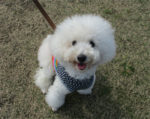 犬のマナー教室イベントレポート
