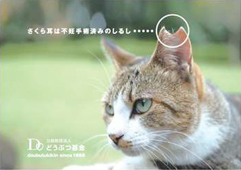 飼い主のいない猫対策を始めます