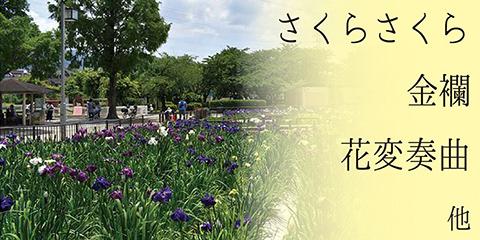 花菖蒲池 野外箏曲会