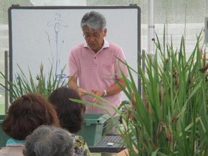 第4回 みどりの教室「花しょうぶの株分け」レポート