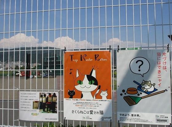飼い主のいない猫対策(TNR)について